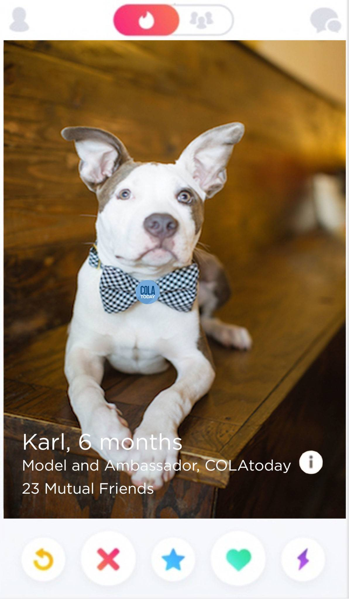 Online puppy dating services