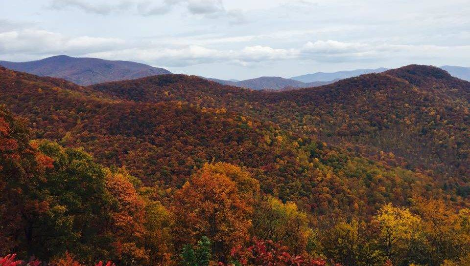 your guide to fall foliage in asheville n c colatoday